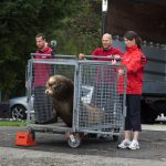 Vancouver Aquarium Releases Flash Gordon the Rescued California Sea Lion