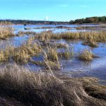 The Importance of Salt Marshes