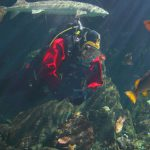 Diving at the Vancouver Aquarium, by the Numbers