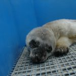 Marine Mammal Rescue Centre Opens Season With New Patient