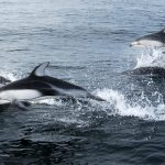 Summer 2012 Travel Log from Cetacean Research Lab — Part One