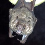 Jamaican Me Crazy: Mind-Boggling Info about Bats