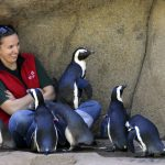 Trainers Welcome Arrival of Seventh Penguin