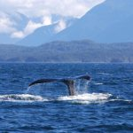 Summer 2012 Travel Log from Cetacean Research Lab — Part Four