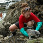 What To Do When You See a Stranded Marine Animal