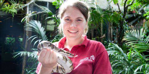 Andrea Cotter, an animal care specialist at the Vancouver Aquarium, holds an African ball python.