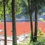 Red Tides Return to Howe Sound