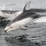 Wrap-up: Cetacean Research Summer Expeditions