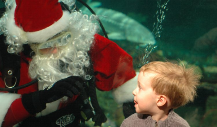 "Scuba Claus will be at the Vancouver Aquarium for two more weeks – come give him a ""high five"" through the glass!"
