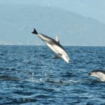 """A """"Real-time"""" Encounter with Dolphins"""