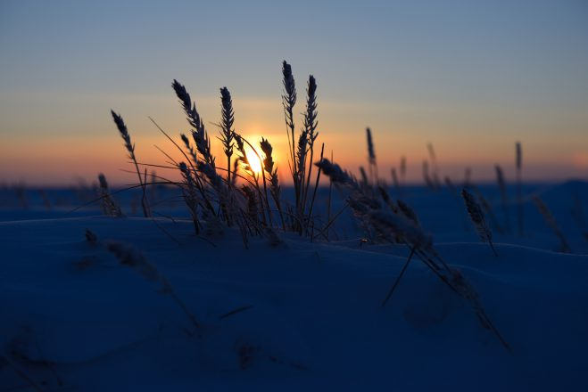 Backlit Frozen Grass
