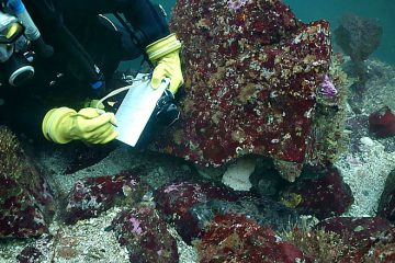 Lingcod Egg Mass Survey at Vancouver Aquarium