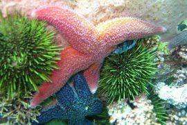 Sea stars and sea urchins are just some of the animals that will be on display at the Petty Harbour Mini Aquarium.