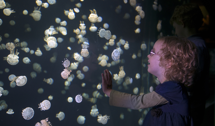 The spotted jellyfish have a way of delighting onlookers.