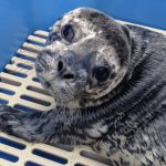 Marine Mammal Rescue of the Week: Aries