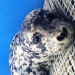 Marine Mammal Rescue of the Week: Draco