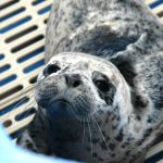 Marine Mammal Rescue of the Week: Orion