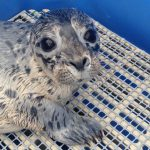 Marine Mammal Rescue of the Week: Titan