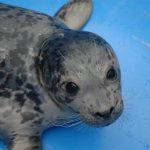 Marine Mammal Rescue of the Week: Lynx