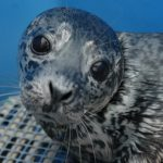 Marine Mammal Rescue of the Week: Rhea