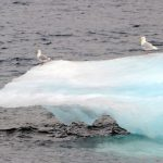 Narwhal 2013: Kicking off an Arctic Adventure
