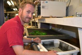 Bryan Kent, senior aquarium biologist, checks on the rockheads behind the scenes.