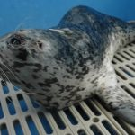 Marine Mammal Rescue of the Week: Venus