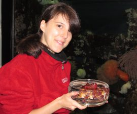Katarina S., customer service agent at the Vancouver Aquarium, holds a Puget Sound king crab.