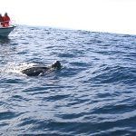 A Day for Pacific Leatherbacks