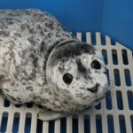 Marine Mammal Rescue of the Week: Pegasus and Titan