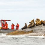 On Steller Sea Lion Alert