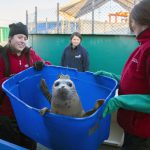 Tracking Rehabilitated Seal Pups' Progress Via Satellite