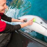 An Open Letter on Cetaceans in Our Care