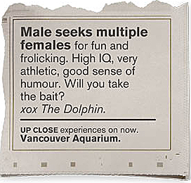 Personalads Dolphin_cropped