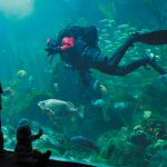 Visiting the Aquarium: Our Tips to You (Part 2)