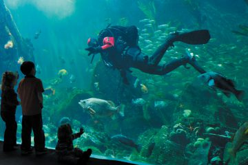 The Pacific Canada exhibit is one of the many mesmerizing exhibits you'll see on a visit to the Aquarium.