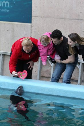 Avery and her parents pay a special visit to rescued harbour porpoise Daisy one Valentine's Day. Photo credit: Jennifer and Niles Hayes.