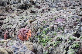 Scientists are coming together to trade knowledge about what may be causing sea stars to die.