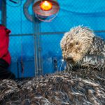 Sea Otter Whiffen Contributes to Learning for Future Cases