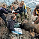 For the Love of Sea Lions