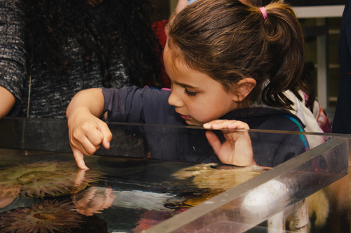A young girl gets hands-on with sea anemones in the Wet Lab. Photo credit: Brett Vo Photography.