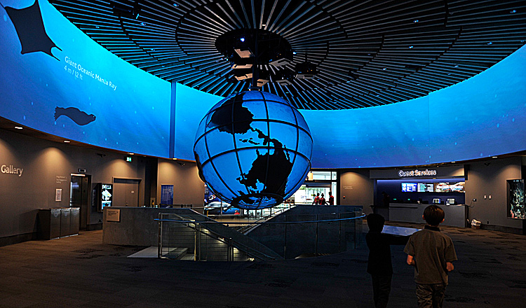 It S A Whole New World At The Vancouver Aquarium Ocean