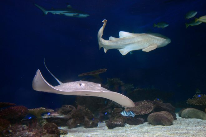Sharks and Rays, Shark week, Vancouver Aquarium