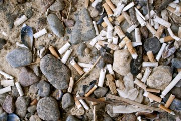 Terracycle recycle cigarette butts from Canadian shorelines.