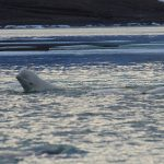 Field Notes from Arctic Watch – Week 3