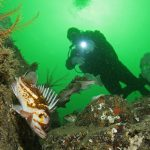 2014 Annual Rockfish Abundance Survey is Now On