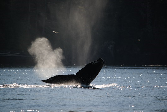 Responsible Whale Watching in B.C