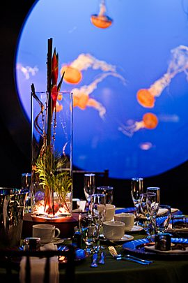 With a living aquatic backdrop, events at the Aquarium are truly one of a kind.