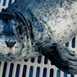 Rescue of the Week: Thin Lizzy from Island Wildlife