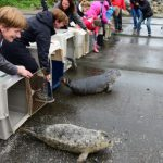 Rescued Seal Pups Released Back to the Wild